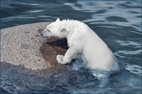 Climate Change Adaptation?