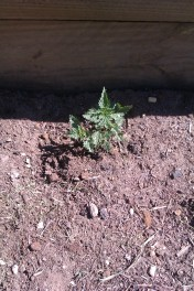 The humble nettle